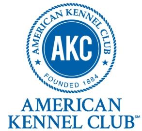 American Kennel Club – HG Parti Yorkies
